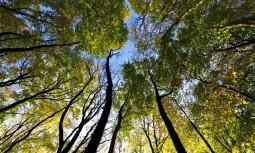 Ağaç Gergi Tavan Modelleri