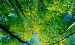 Ağaç Tavan Gergi Modelleri