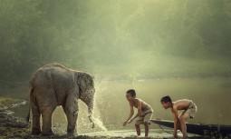 Hayvan Temalı Gergi Tavan