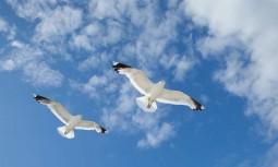 Kuş Gergi Tavan Modelleri